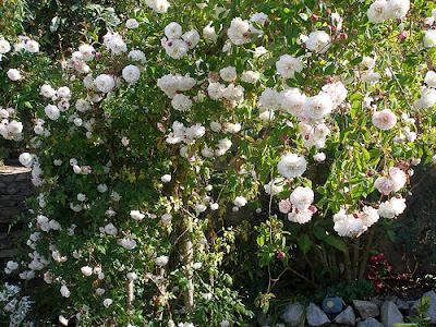 Rbol de rosas paperblog - Arbol de rosas ...