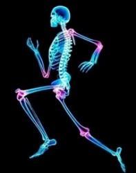 ¡Atención! Los huesos necesitan más que solamente calcio