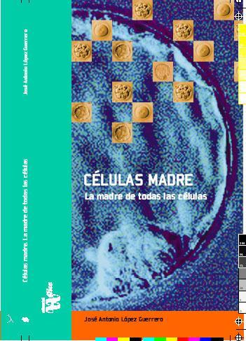 Células madre embrionarias más estables…