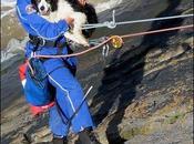 Rescatado vivo perro había caído acantilado mientras perseguía gaviota.
