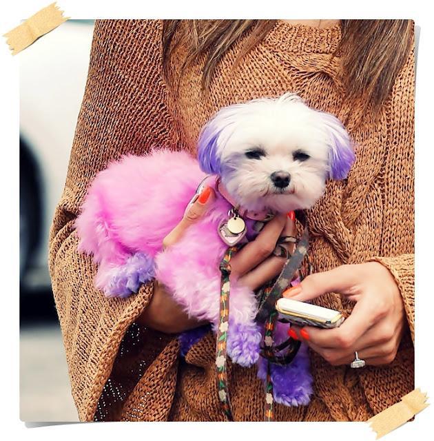 Encuesta: Perros de colores, ¿teñirías al tuyo?