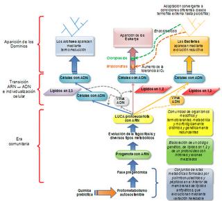 Evolución prebiótica y origen de la vida III: LUCA y el árbol de la vida