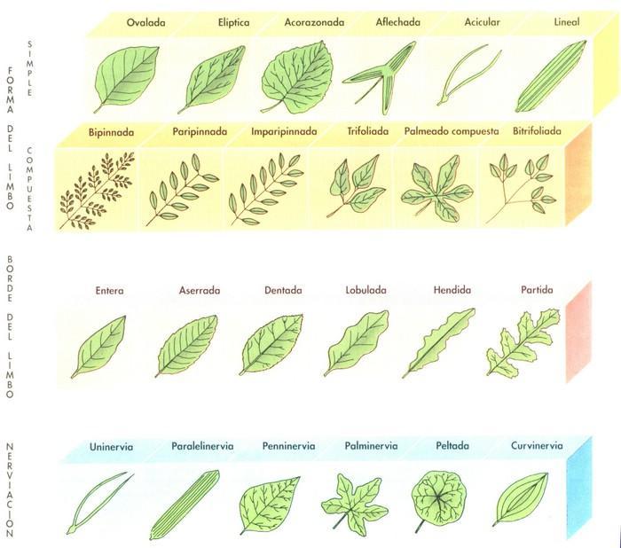 Anatomía Y Fisiología Vegetal Ii Estructuras Implicadas En