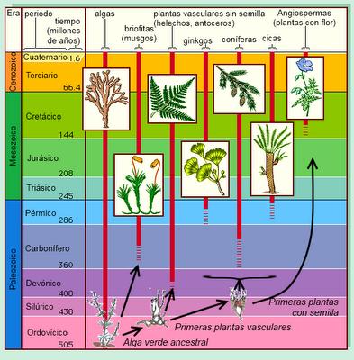 Evolución de las plantas II: la radiación de las plantas terrestres