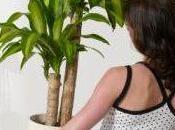 Plantas fuertes hechas casa