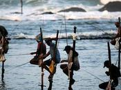 catrinastewart: Stilt Fishing Lanka