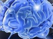 Cientificos argentinos lograron desentrañar mecanismos cerebrales olvido