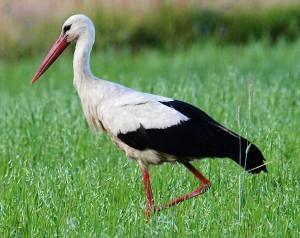20 Aves de Venezuela con toda su información un excelente trabajo de Audubon de Venezuela