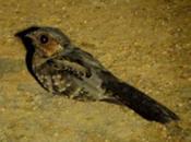 Aves Venezuela toda información excelente trabajo Audubon