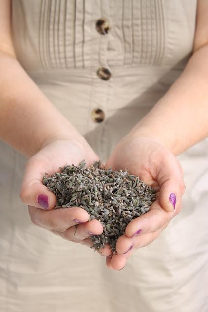 Plantas aromáticas que adornan : Lavanda Parte II ...Ideas de como utilizar la lavanda