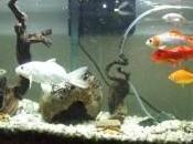 Comentario Adecuada oxigenación para peces Laura