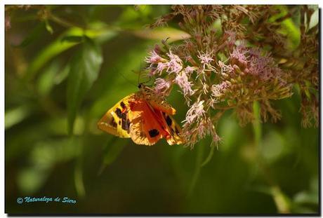 Insectos y polillas