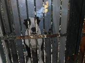 Cachorra pitbull perrera, sólo tiene 5-6- meses (Sevilla)