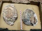 """""""Manda huevos…"""". Encuentran Lanzarote huevos antecesores avestruz hace millones años."""
