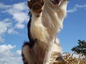 adiestramiento canino necesario para tener perro obediente