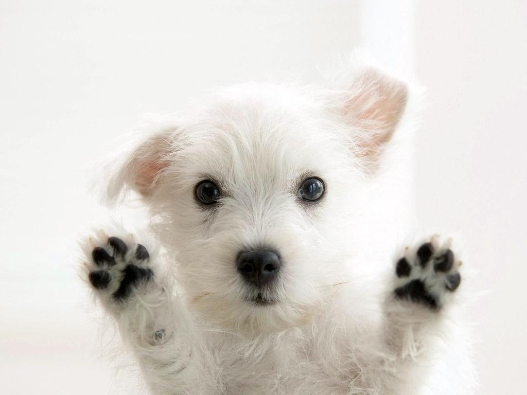 La felicidad de obtener perros en adopción - Paperblog
