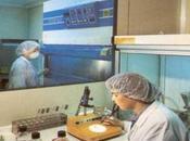 Celulas madre: INCUCAI regula procedimientos