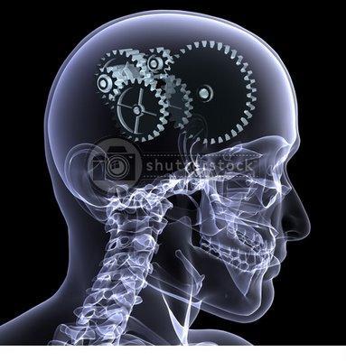 50 curiosidades sobre el cerebro (mito y realidad)