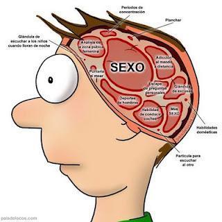 [Cerebro_hombre.jpg]