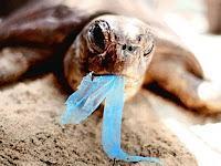 El mar es una sopa de… basura