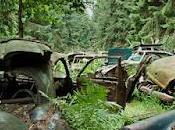 Cementerio coches abandonados tras Segunda Guerra Mundial bosque Chatillon, Bélgica.