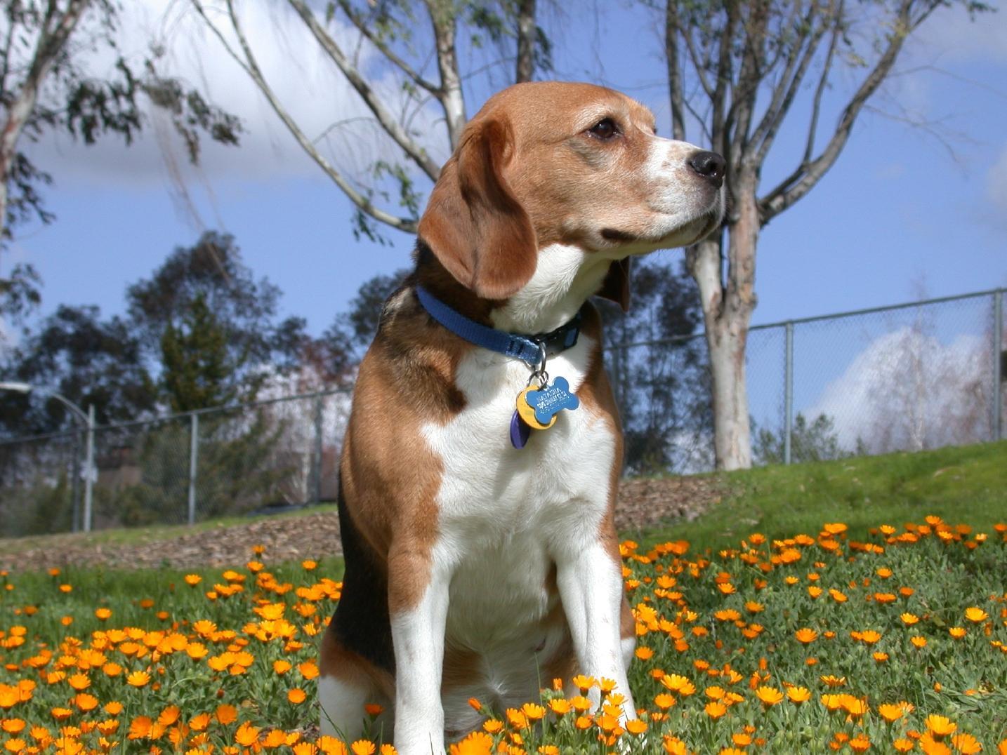 Los usos de collares para perros paperblog for Collares para perros