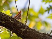 mariposa bonita exquisita dieta