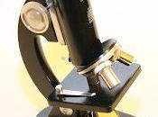 Práctica Microscopio