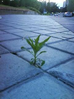 Renacer ante los obstaculos. Objetivo Resiliencia.