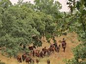 Rewilding, retuertas caballo futuro