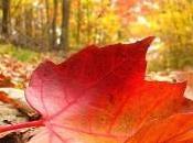 Octubre, print animal, marea rosa mucho más..