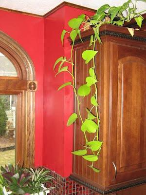 Poca luz plantas de interior paperblog for Plantas de interior con poca luz