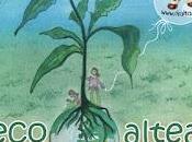 Humanizando sociedad, EcoAltea