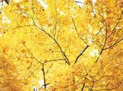 Inspírate: detalles otoño