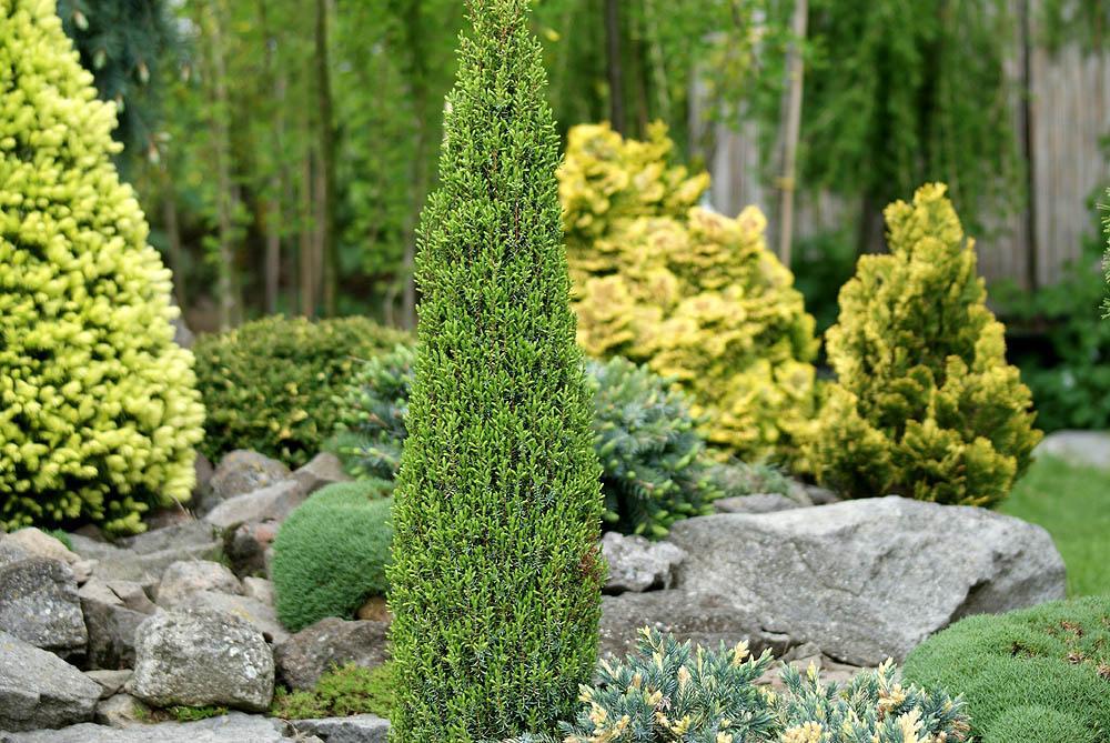 Elegir plantas para jardines de rocalla paperblog for Plantas en jardines pequenos