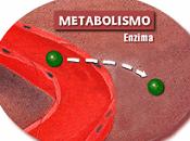 Ejercicio para corregir metabolismo
