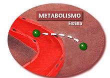Ejercicio para corregir el metabolismo