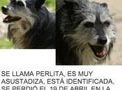Perlita, perrita perdida 19/04/10 Plaza Olavide, Madrid