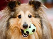 Accesorios para Perros Ayudan Mejorar Comodidad