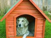 Casas para Perros Seguridad Confort Mascota