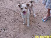 Cachorro tamaño pequeño abandonado ¡¡es demasiado confiado!! URGENTE!!