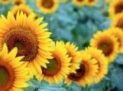Beauty Thursday: Sunflower Seeds Jueves Belleza: Semillas Girasol