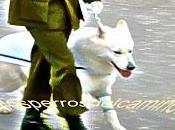 """""""Perros Parada Militar"""""""