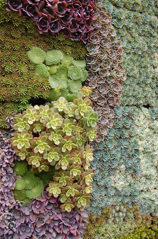 Curso intensivo de jardines verticales paperblog for Pinterest jardines verticales