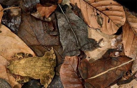 9 Maestros del camuflaje en el reino animal 1