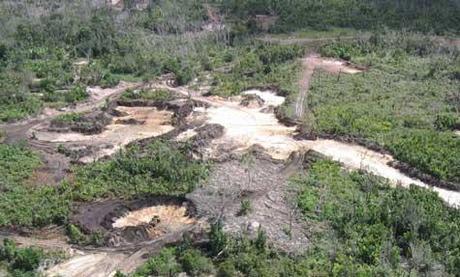 La Reserva Forestal Imataca un bosque en peligro de extinción