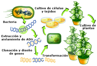 bacillus thuringiensis thesis