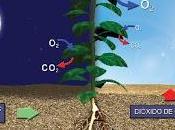 ¿que fotosintesis?