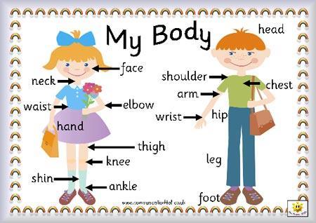 partes cuerpo humano PARTES DEL CUERPO HUMANO EN INGLÉS.