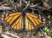 santuarios mariposa monarca Mexico
